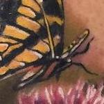 Realistic color butterflies with thistle flower. Ryan Mullins Art Junkies Tattoo Tattoo Design Thumbnail