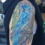 tattoos/ - Blue Jay (Healed) - 124851