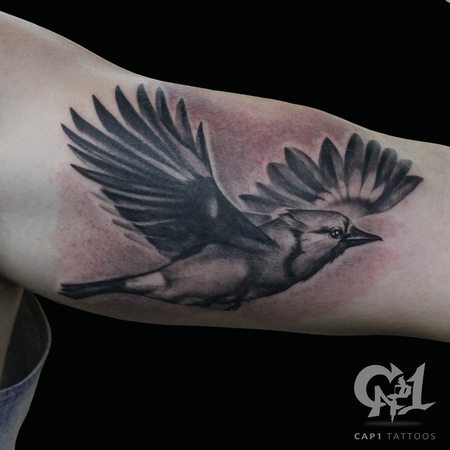 Tattoos - Flying Blue Jay - 122135