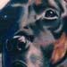 Tattoo-Books - black dog portrait - 1264