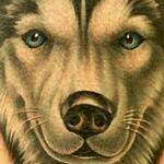 Color Husky Portrait Tattoo Design Thumbnail