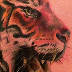 Roaring Tiger Tattoo Tattoo Design Thumbnail
