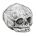 Art Galleries - Dotwork Fetal Skull - 126159
