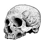 Art Galleries - Dotwork Skull Drawing - 125314