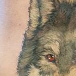 Grey wolf, red rose Tattoo Design Thumbnail