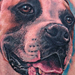 Boxer Dog Portrait Tattoo Tattoo Design Thumbnail