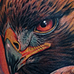 Eagle Portrait Tattoo Tattoo Design Thumbnail