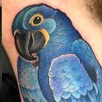 Blue maccaw  Tattoo Design Thumbnail