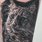 tattoos/ - Cat Portrait - 129984
