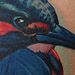Tattoo-Books - Kingfisher Tattoo - 71679