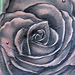 Tattoo-Books - Rose Tattoo - 36203