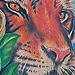 Tattoo-Books - Sly's Tiger Tattoo - 26278