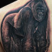 Tattoo-Books - Silverback Gorilla  - 72812