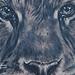 Tattoo-Books - Tiger Tattoo - 52836