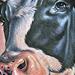 Tattoo-Books - Cow Tattoo - 34865