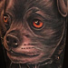 Combo-Packs - Dog Tattoo - 87652
