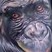 Tattoo-Books - Monkey Tattoo - 42432