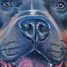 Tattoo-Books - Pit Bull Tattoo - 40996