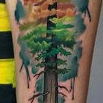 Autumn Aspen Inspired Redwood Tattoo Design Thumbnail