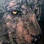 Wolf Tattoo Tattoo Design Thumbnail