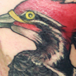 Woodpecker tattoo Tattoo Design Thumbnail