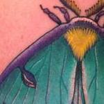 Traditional Moth Tattoo   Tattoo Design Thumbnail