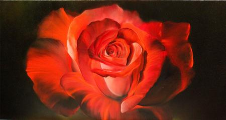 Art Galleries - Red Rose - 120645