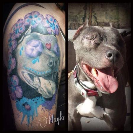 Flower Venus Flytrap - Odin, the pit bull with our eyes by Haylo
