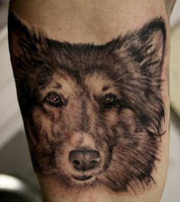 George Perham - Dog Portrait Tattoo