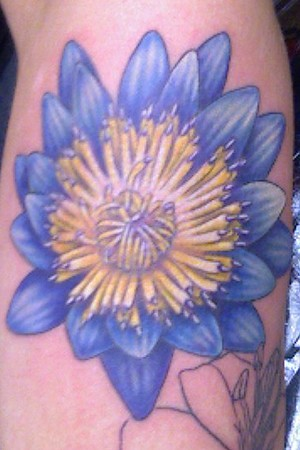 water lily tattoo. Sean Ohara - Water Lily