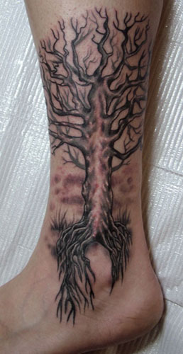 Stina Sardinha Scarred tree and roots over Ankle