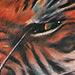 Tattoo-Books - Angry Tiger Tattoo - 50879