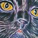 Tattoo-Books - Kitty Tattoo - 26559